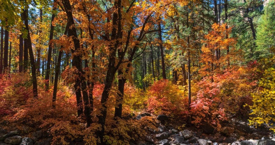 The Scenic West Fork Oak Creek Canyon Trail is the Best fall Hike in Sedona